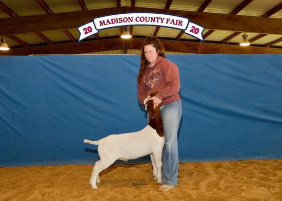Goat - Emillie Harrison - Lamb & Goat Club