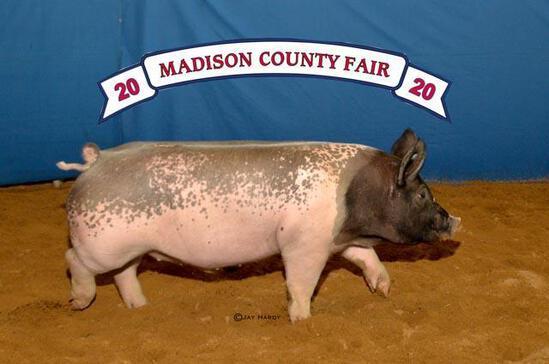 Swine - Emily Butts - Swine Club