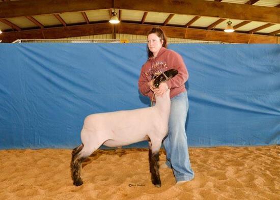 Sheep - Hayden Hurst - Lamb & Goat Club