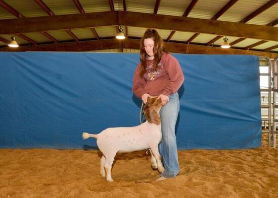 Goat - Madi Caperton - Lamb & Goat Club