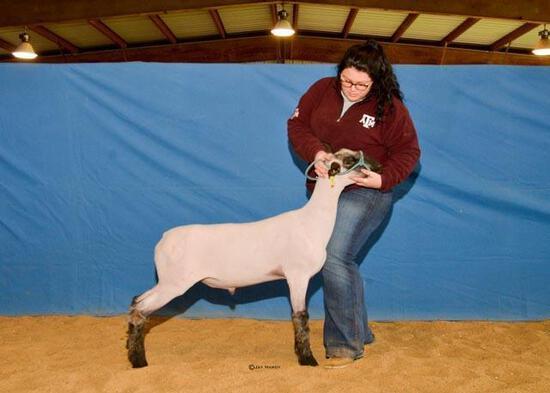 Sheep - Madalynn Regnold - North Zulch 4-H