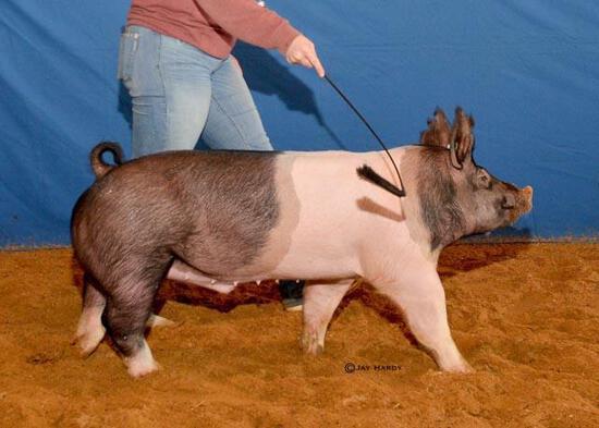 Swine - James Jarrett - Swine Club