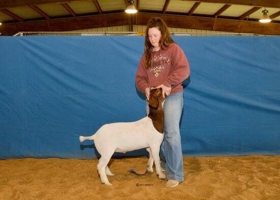 Goat - Emma Hurst - Madisonville FFA