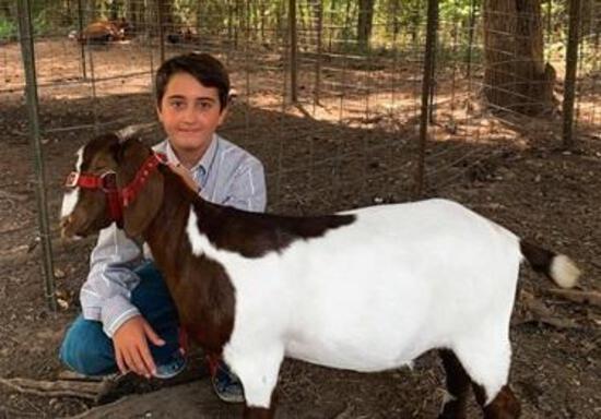 4th Place Goat - Austin Wallace - 4H