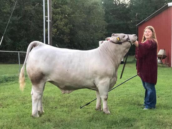 Reserve Champion Steer - Kayla Kembro - 4H