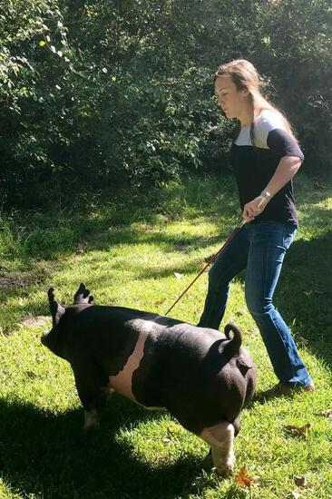 3rd Place Swine & Showmanship - Zoey Gray - FFA