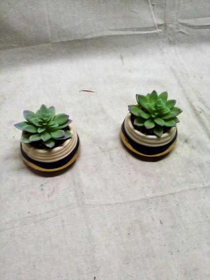 Pair of Artificial Succulents