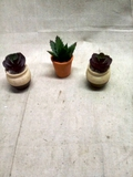 Three Mini Artificial Succulents approx. 3.5