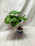 Aritificial Plant approx. 20