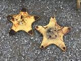 (2) STARS FOR NH RAKE - BOTH ONE PRICE