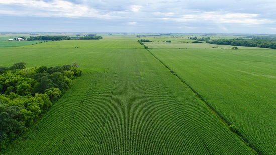 Fillmore County, MN 228.5 +/- Acre Land Auction