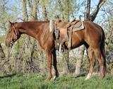 Otoes Rodeo Frederick- 4 y/o AQHA Gelding