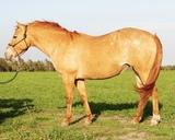Babe- 13 y/o Pony Mare