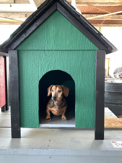 Green Dog House