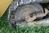 CAT 943 REAR ENGINE CRAWLER LOADER, Image 5