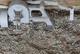 Pump Jack Mechanism for Stickney Engine