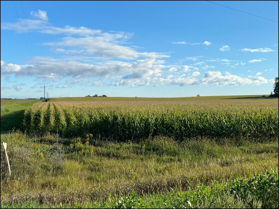 Approx 240 Acres of Prime Kandiyohi Farm Land