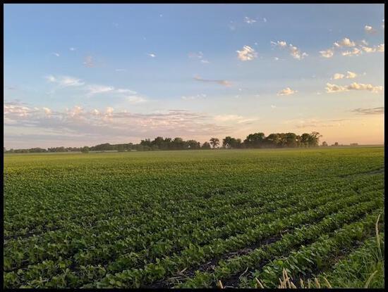 Parcel 3: 111.81 Acres (106.5 Acres Tillable), Section 11, St. John's Twp, Kandiyohi Co.