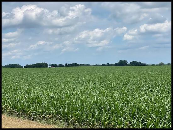 Parcel 1: 160 Acres of Prime Lyon Co. Farm Land Located in Section 22, Stanley Twp, Lyon Co.