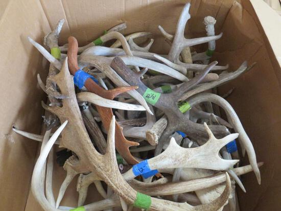 30 LBS OF ASSORTED ANTLERS