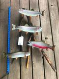 Three RAINBOW TROUT and One CUTHROAT TROUT on Drift wood display, AWESOME REAL SKIN Taxidermy mounts