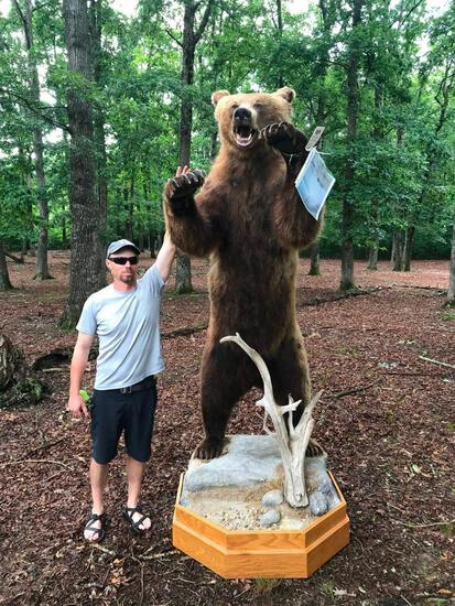 HUGE 8 foot 8 inch tall STANDING Alaskan Brown / Grizzly BEAR Beautiful Taxidermy ^ REAL CLAWS !!
