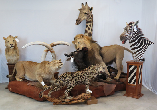 2 DAY TEXAS SIZED TAXIDERMY/WESTERN AUCTION DAY 1
