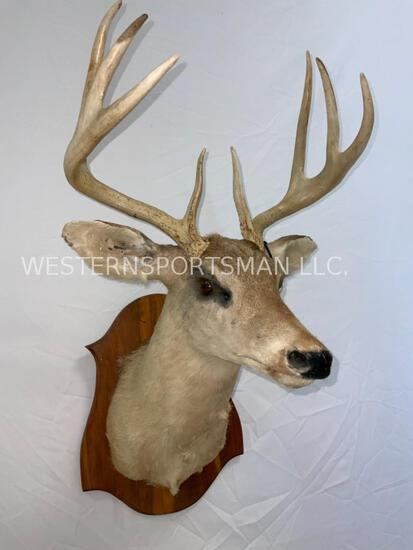 Whitetail Sh Mt on Plaque TAXIDERMY