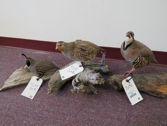 3 Lifesize Birds on Wood Pieces (3x$) TAXIDERMY