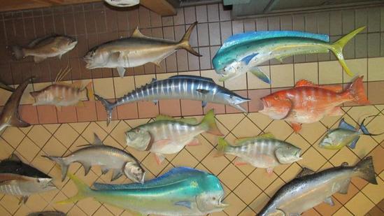 (19) Full & Half Mount Fish - L