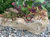 Tufa Live Rock Garden Art - 15