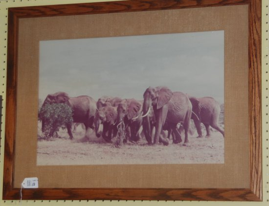 Framed Art Group of Elephants Photo