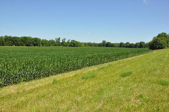 Tract 1 - 78.58 Acres +/-