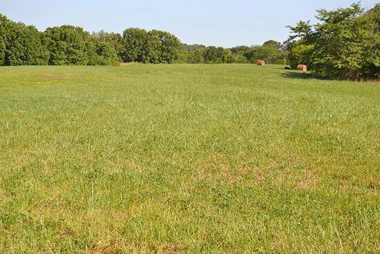 Tract 2 - 123 Acres+/- (subject to survey)