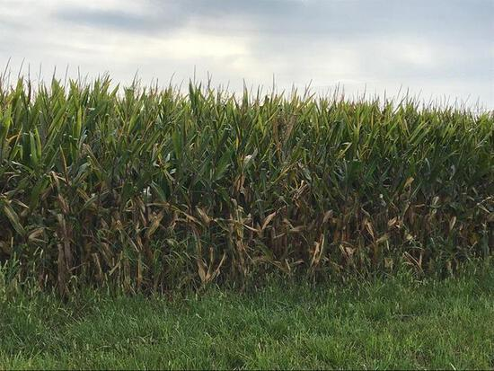 Tract 1 - 81.38 Surveyed Acres