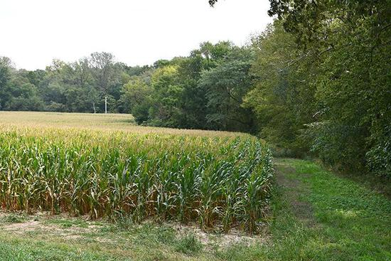 Tract 4 - 26.91 Surveyed Acres