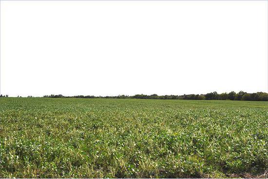 Tract 2 - 83.4 Surveyed Acres