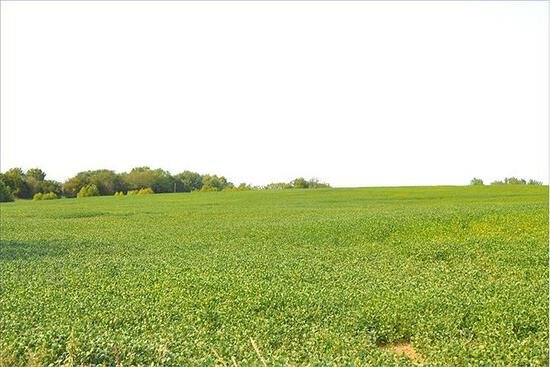 Tract 3 - 73.3 Surveyed Acres