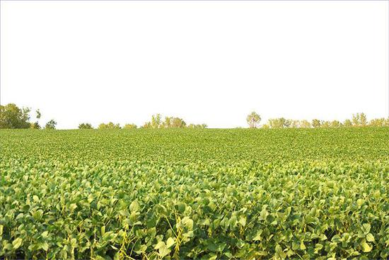 Tract 4 - 79.4 Surveyed Acres