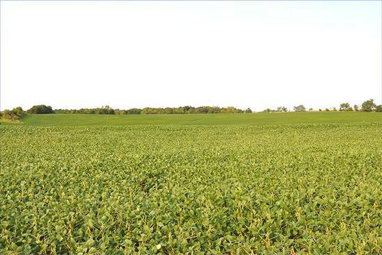 Tract 5 - 78.9 Surveyed Acres