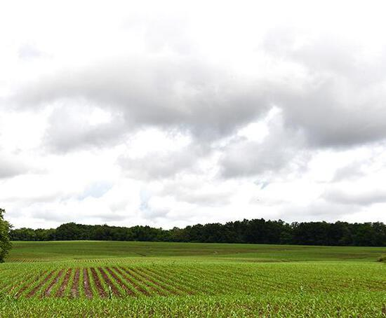 Tract 1 - 80.55 Surveyed Acres