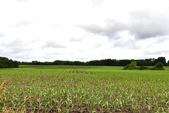 Tract 2 - 80.96 Surveyed Acres