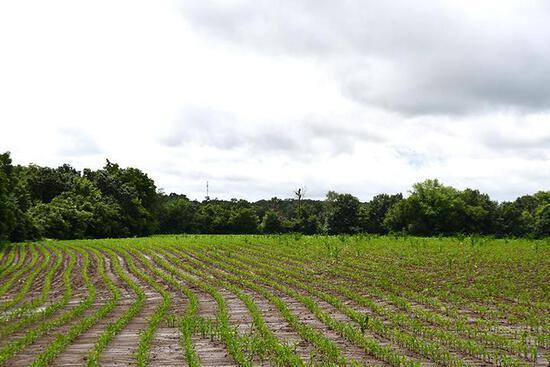 Tract 3 - 40.51 Surveyed Acres