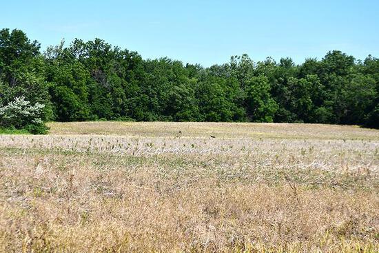 Tract 1 - 105.7 Surveyed Acres+/-