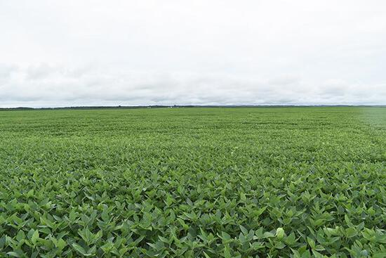 Tract 1 - 206.56 Surveyed Acres+/-