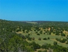STUNNING 2.5 ACRE IN NAVAJO COUNTY, ARIZONA! MINI RANCHETTE! FORECLOSURE JUST TAKE OVER PAYMENTS!