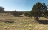 GORGEOUS 10 ACRE IN APACHE COUNTY, ARIZONA! EXCELLENT BUY! TAKE OVER PAYMENTS! FORECLOSURE!