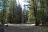 California 1.33 Acre Property! In Beautiful California Pines Subdivision Bid & Take Over Payments!