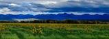 Gorgeous 5 Acre Colorado Ranchette! Close to Rio Grande River! Cash Sale!! Cash File Number 1537509