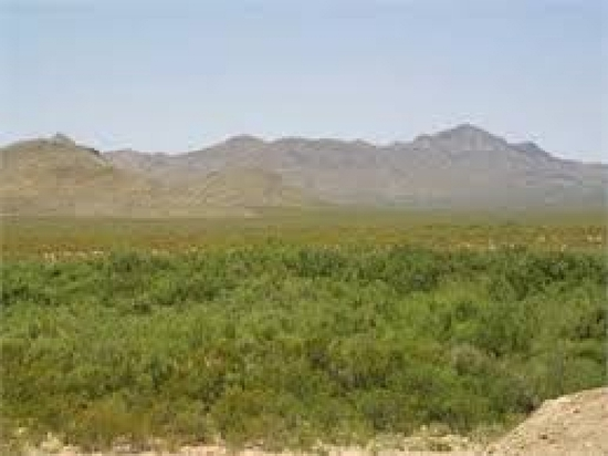 TAKE OVER PAYMENTS! ROAD ACCESS! BEAUTIFUL TX LAND. 10AC., HUNTING, CAMPING. BID AND ASSUME! (Vault_